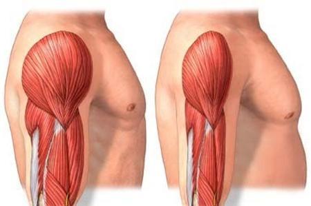 Esercizi per Aumentare la massa muscolare