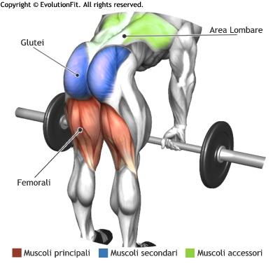 stacchi-a-gambe-tese-muscoli-coinvolti