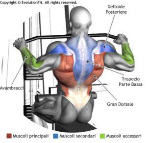 lat-machine-avanti-muscoli-coinvolti