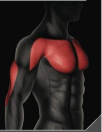 chest-press-muscoli-coinvolti