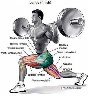 affondi-frontali-muscoli-coinvolti