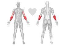 muscoli-avambraccio