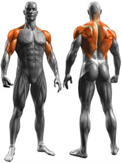 tirate-al-mento-muscoli-coinvolti