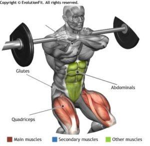 front-squat-muscoli-coinvolti