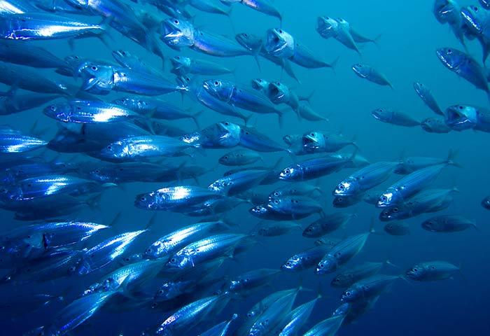 pesce-azzurro-elenco