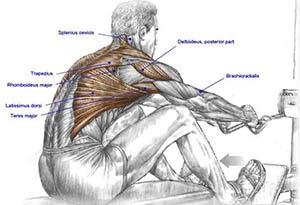 pulley-basso-muscoli-coinvolti