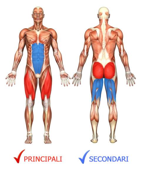 squat-jump-muscoli-coinvolti