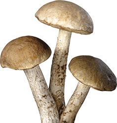 frutti-e-verdure-autunnali-funghi