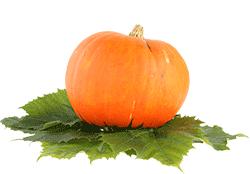 verdura-autunnale-zucca