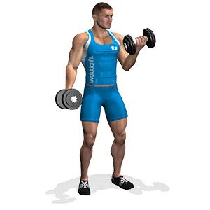 curl-manubri-esercizi-braccia