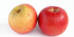 mela-calorie-annurca