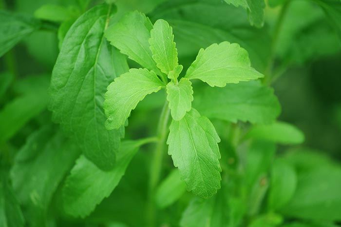 che-cose-stevia