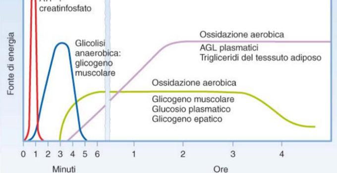 insulina-e-glucagone