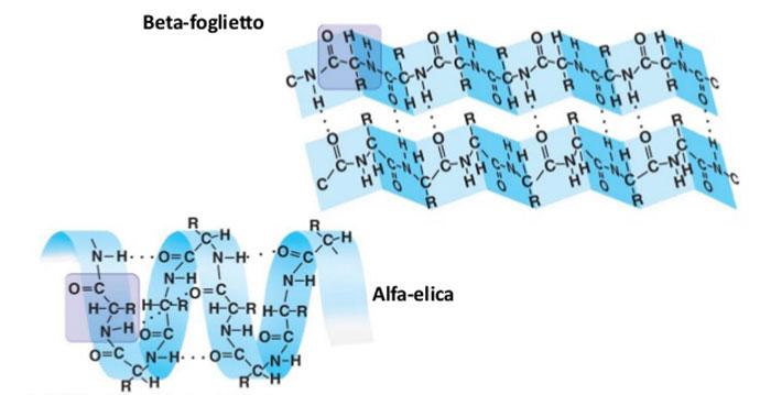 Image result for struttura alfa elica