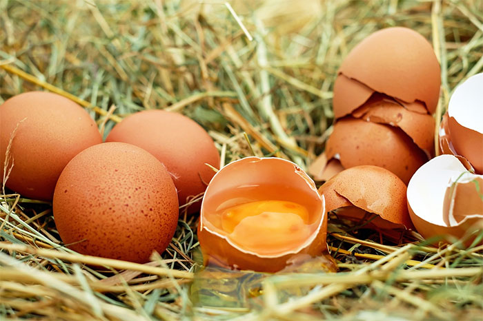 calorie-uovo-gallina